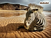 Sfondo: Zebra